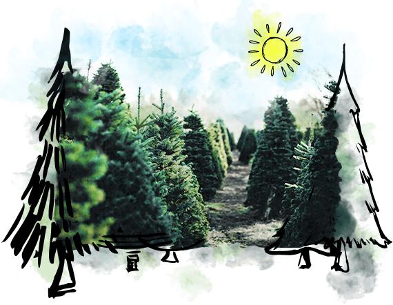 Weihnachtsbaum Selber Schlagen Sauerland.Weihnachtsbaum Guru