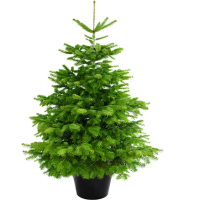 Weihnachtsbaum Kaufen Essen.Weihnachtsbaum Guru